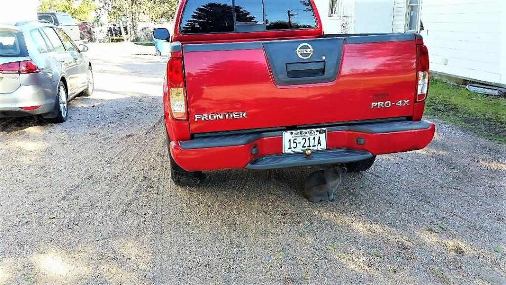 well serviced 2010 Nissan Frontier pickup